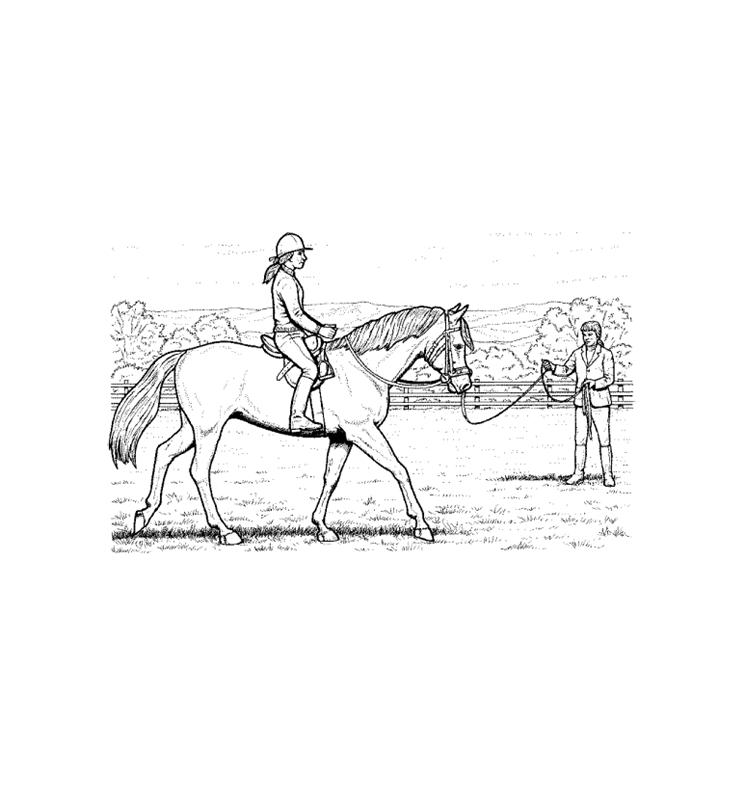 pferde00005 gratis malvorlage in pferde tiere  ausmalen