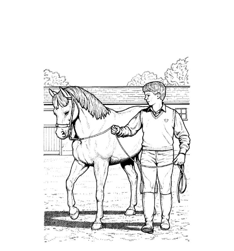 pferde00009 gratis malvorlage in pferde tiere  ausmalen