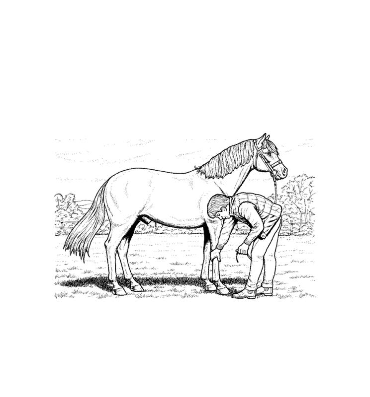 pferde00010 gratis malvorlage in pferde tiere  ausmalen