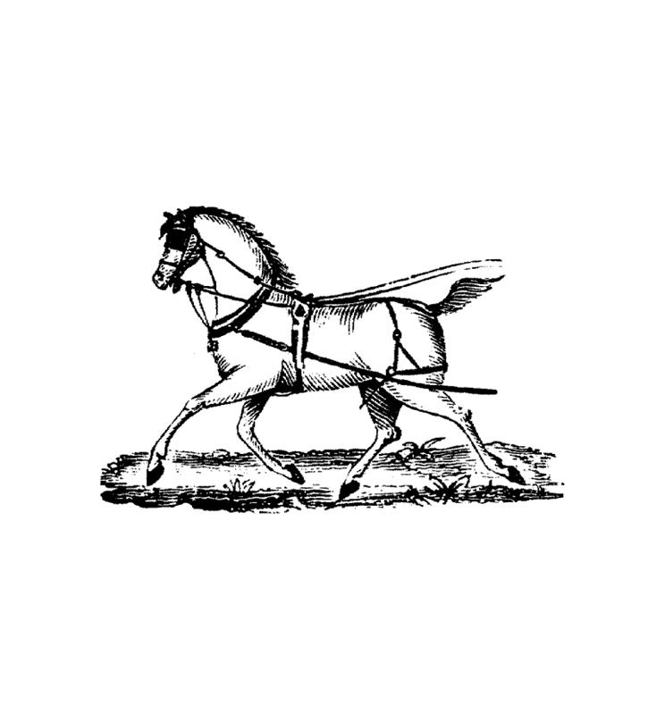 pferde00014 gratis malvorlage in pferde tiere  ausmalen
