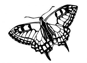 Malvorlage Schmetterlinge Schmetterlinge_00413