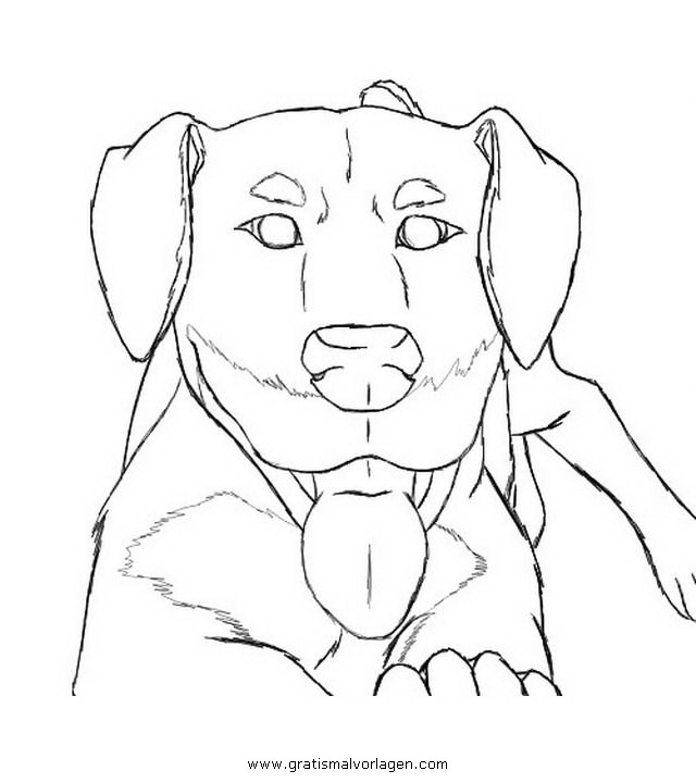 rottweiler4 gratis malvorlage in hunde tiere  ausmalen