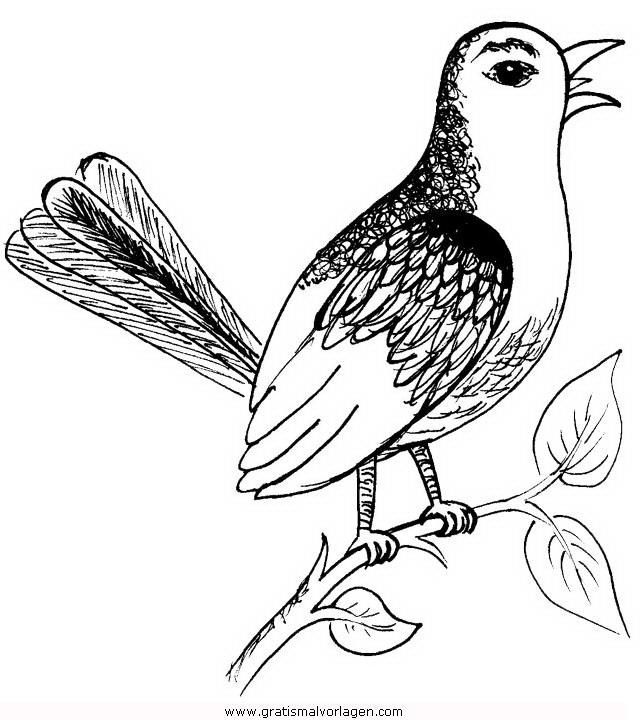 singvogel2 gratis malvorlage in tiere vögel  ausmalen