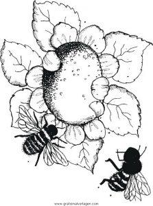 Sonnenblume Gratis Malvorlage In Diverse Malvorlagen Garten Ausmalen